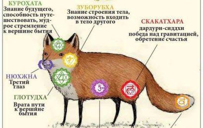 Система чакр лисы