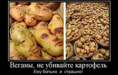 Веганы, не убивайте картофель!