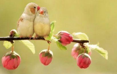 Семинар «От привязанности и подавления к безусловной любви»